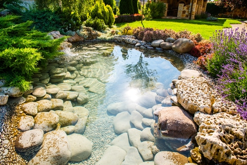 pond built in a suburban backyard
