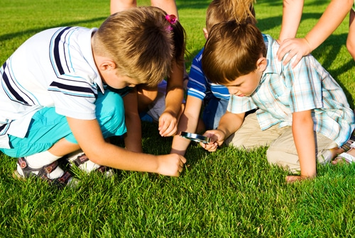Kids using magnifying glass to view bugs