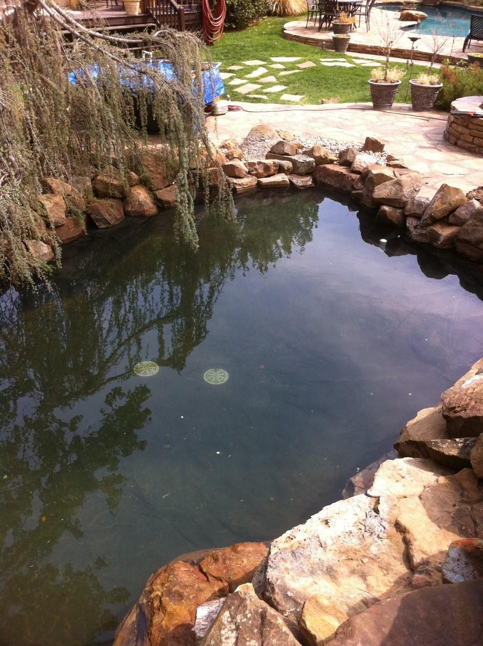 finished koi pond
